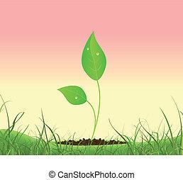 primavera, pianta, crescente, in, uno, giardino