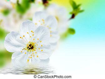 –, primavera, plano de fondo, hermoso, flores, flor
