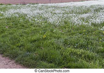 primavera, pradera