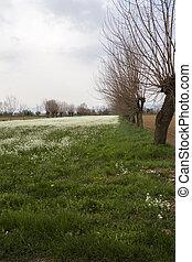 primavera, prado