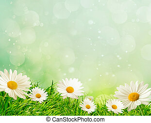 primavera, prado, margaridas