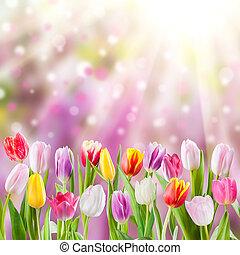 primavera, prato