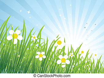 primavera, prato, bello