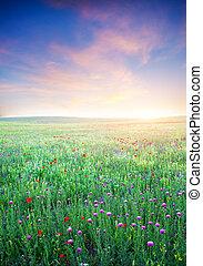 primavera, prato, flower., viola