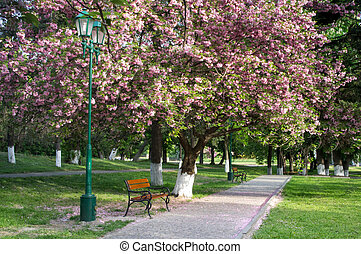 primavera, pubblico, sakura, giardino