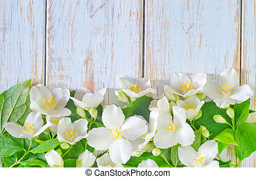 primavera, quadro, jasmine, fundo, flores brancas