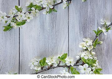 primavera, rama floreciendo