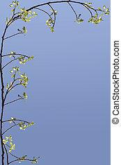 primavera, ramo, cornice