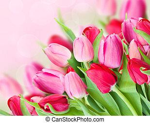 primavera, ramo, rosa, tulipanes
