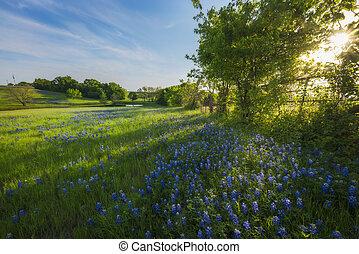 primavera, reflejar, charca, rural, flores, tejas