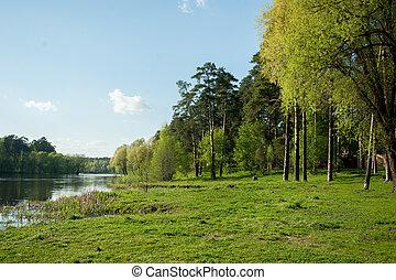 primavera, riva, confortevole, lago