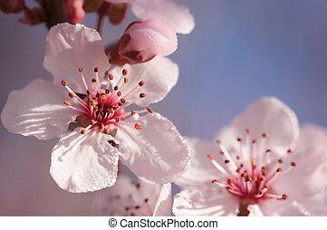 primavera, rosa, albero, fiori