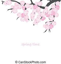 primavera, scheda, ramo, ciliegia