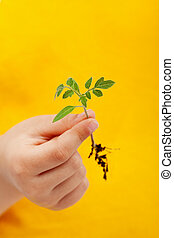 primavera, seedling, em, criança, mão