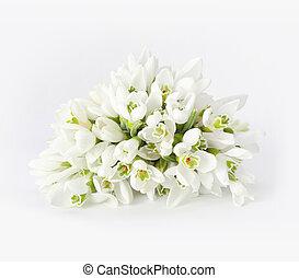 primavera, snowdrop, flor