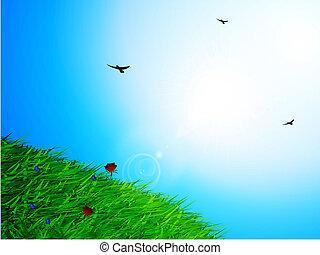 primavera, soleado, cielo, y, pasto o césped, plano de fondo