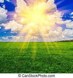 primavera, trigo, dia, campo