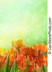 primavera, tulipanes, en, campo