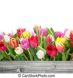 primavera, tulipanes, flores