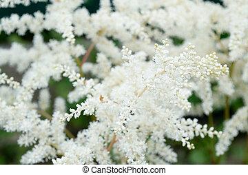 primavera, verão, flores brancas
