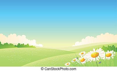 primavera, verano, o, cartel, estaciones