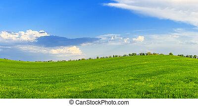 primavera, verde, ensolarado, prado, dia