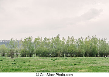 primavera, verde, paisaje, árboles