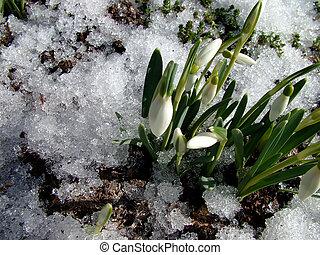 primavera, viene