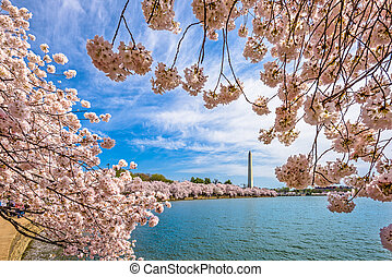 primavera, washington dc