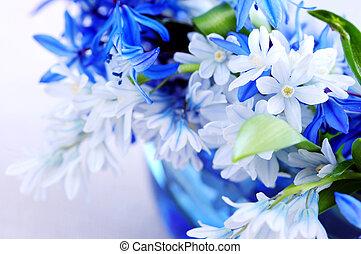 primeiro, flores mola