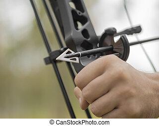 primer plano, arrowhead., caza, foco, mano, forest., ...