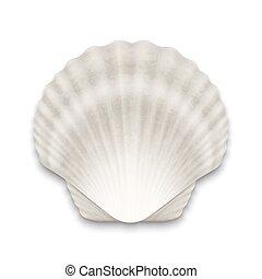 primer plano, cerrado, venera, realista, concha marina, ...