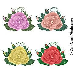 primer plano, conjunto, de, rosas, aislado, blanco, plano de fondo