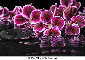 primer plano, cuentas, oscuridad, vida, onda, florecer, geranio, agua, balneario, flor, reflexión, púrpura, todavía, hermoso