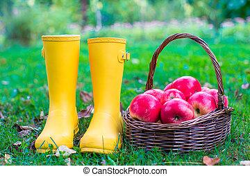 primer plano, de, amarillo, cargadores de goma, y, cesta, con, manzanas rojas, en el jardín