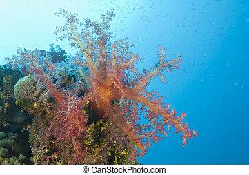 primer plano, de, coral suave, en, un, arrecife