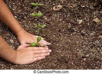 primer plano, de, niño, plantación, un, pequeño, planta
