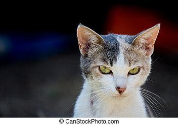 primer plano, de, un, gato, cara