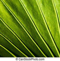 primer plano, de, un, planta verde, hoja