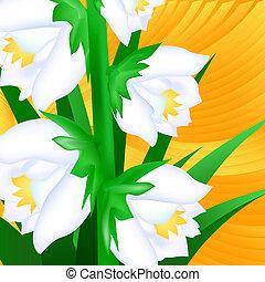primer plano, flores, yuca
