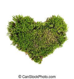 primer plano, forma, musgo, corazón, verde, sphagnum, ...
