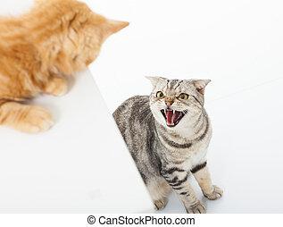 primer plano, gatos, plano de fondo, blanco, encima, conflicto, dos