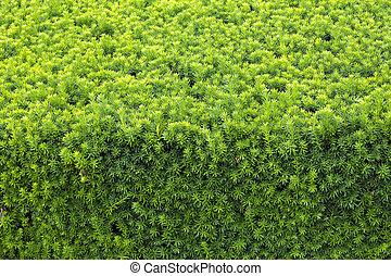 primer plano, naturaleza, vista, de, hoja verde, en, confuso, verdor, plano de fondo, en, jardín, con, espacio de copia, utilizar, como, plano de fondo, natural, verde, plantas, paisaje, ecología, fresco, papel pintado, concept.