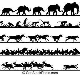 primer plano, siluetas, animal