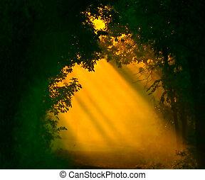 primero, luz tenue, de la luz