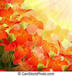primevère, printemps, fond, fleurs blanches, rouges