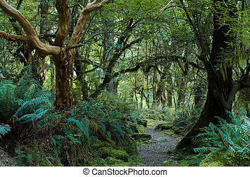primeval forest on kepler track, fiordland, new zealand