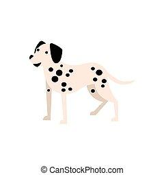 primitif, race, chien, illustration, dalmatien, dessin animé