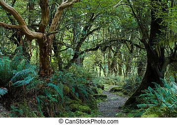 primitivo, bosque
