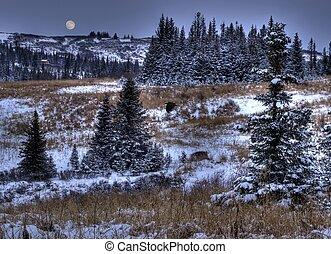 primo, neve, luna